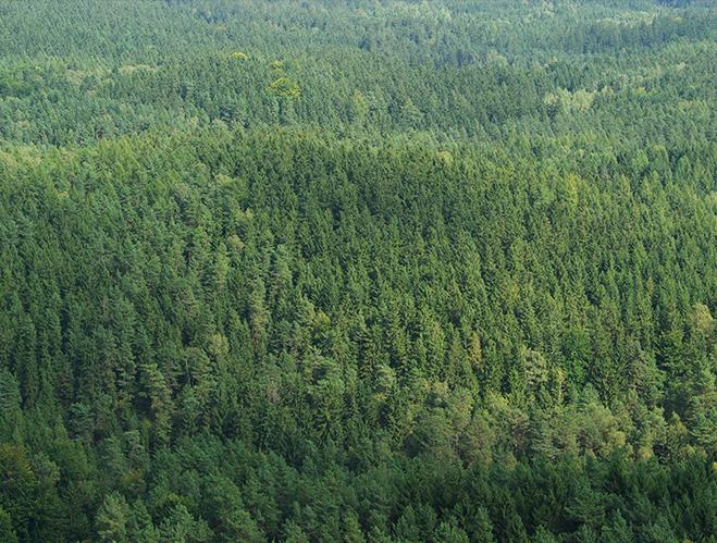 Miško įsigijimas ir profesionali priežiūra