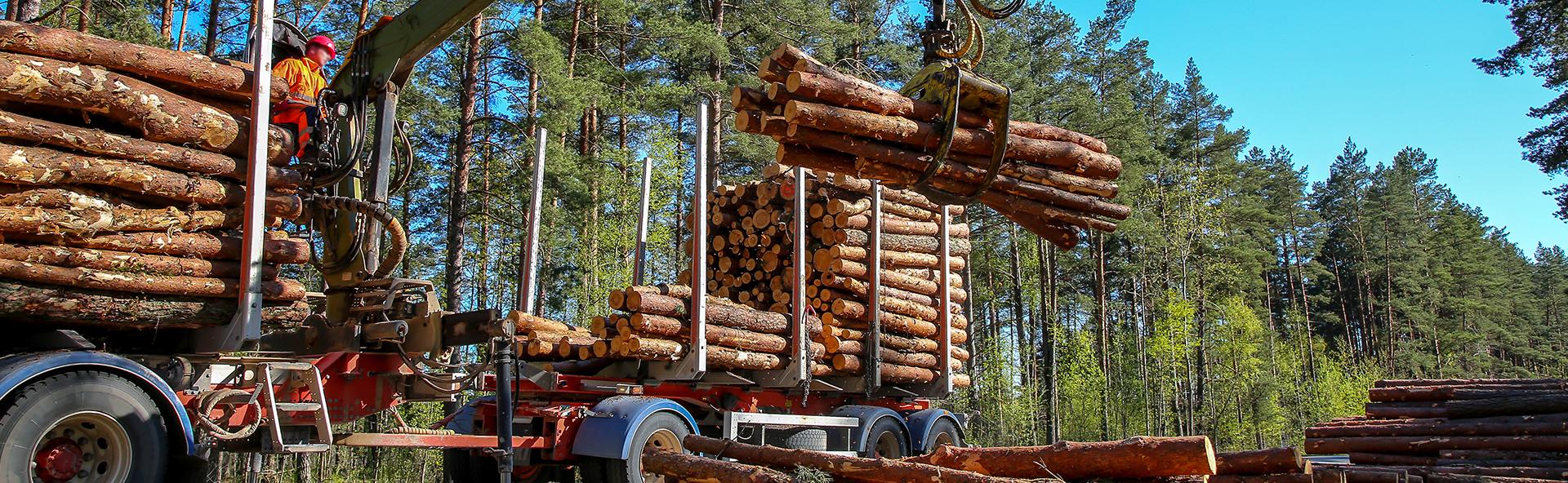 Organizuojame miško kirtimą